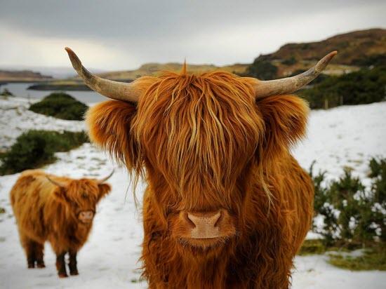 Animal Photographs