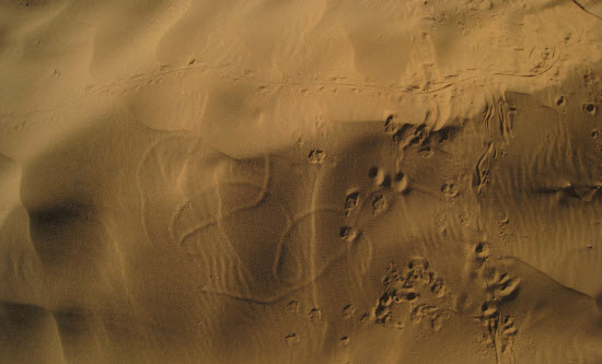 25 Free Desert Textures Collection textures sand textures sand picture images free textures Free Desert Textures free download Desert Textures 25 Free Desert Textures Collection