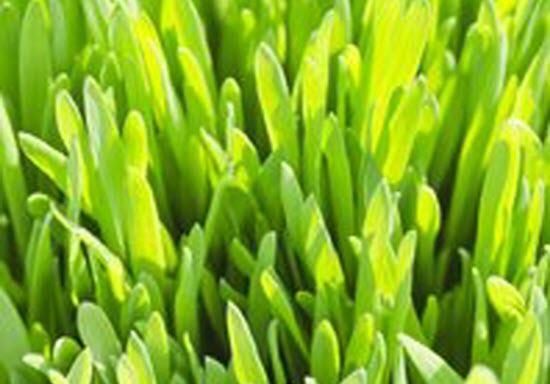 Grass Textures