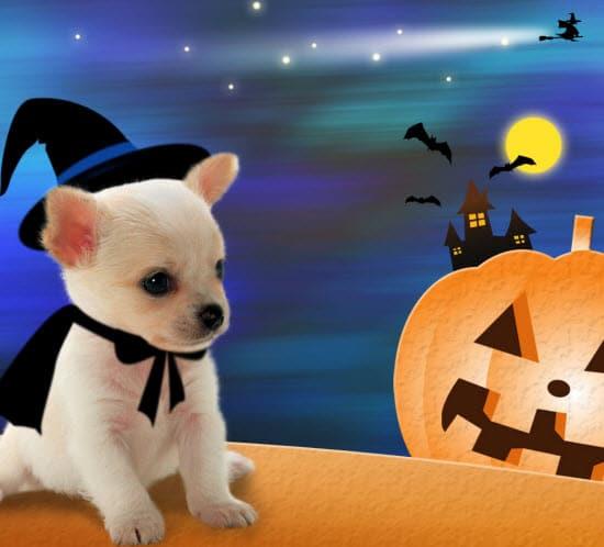 Halloween iPad Wallpapers